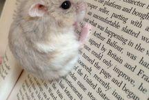 Hamster Zeugs