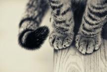 gatti / cats / by Asami Kato