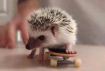 So Cute!! / by Krystel Nassif