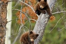 Canadian Wildlife / Beautiful Canadian Wildlife Pictures