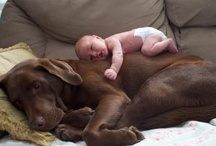 Pets and Babies / by Nancy Bachus