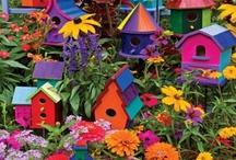 Funky little birdhouses=loveshack / by Shelley Cook