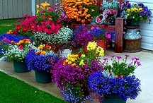 Container gardening! / by Shelley Cook