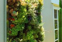 Succulents n living walls / by Shelley Cook