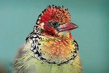 Put a BIRD on it! / Fun, fab birds...I love em!