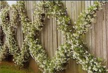 Espalier & trellised  / by Shelley Cook