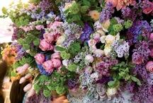 Floral Arrangements / by Shelley Cook