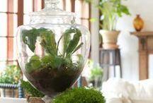 Terrariums / by Shelley Cook