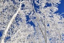 WINTER Blues / by Diane Vincent