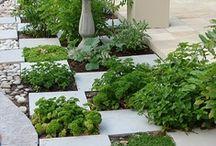 Edible gardens / by Shelley Cook