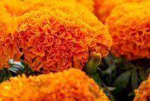 Orange Julius in the garden / by Shelley Cook