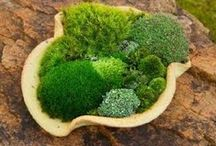 Love the moss / by Shelley Cook