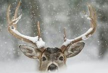 Winter Wonderland / by Mandi Brooks
