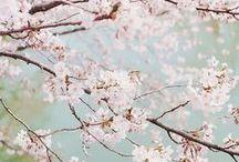FLORAL | Blossoms