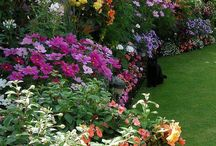 Sunny Flower Patch Gardening  / by Marcella Hoff