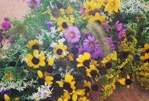 flowers always make me smile / by Anna Josephine ✿