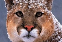 Awesome Animals / by CE Thompkins