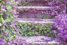 Gardening / Gardening, landscapes, front porches, tips, and more