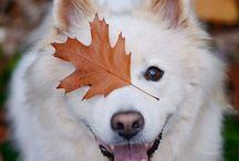 Automne  Autumn  Fall
