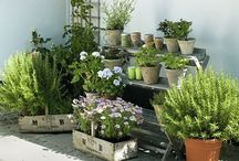 Giardino - terrazza