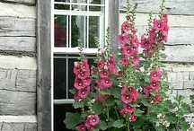 hollyhocks and pussywillows..... / by Nora Gholson