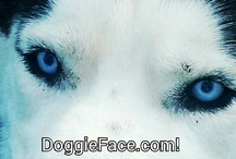 DoggiePin / The Doggie Social Network from www.DoggieFace.com! / by Chase Bruder
