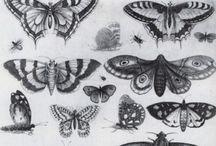 scientific+botanical illustrations