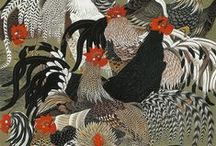 CHICKENS / by Diana Thorold