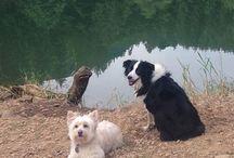 Daisy & Honey / Dogs & cats