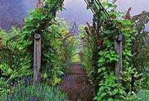 Vegetable, Herb, & Beautiful Gardens / Vegetable and Herb Gardens / by Jennifer Horowitz ~ Goosebump Factor