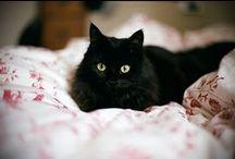 Little black cat...
