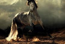 Horses! / by Tanya Miner