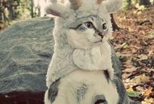 adorable things! / by Christine Sadrnoori