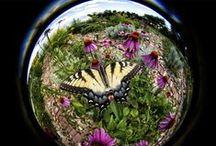 Lensbaby Circular Fisheye / Photos taken with our 5.8mm f/3.5 185° Circular Fisheye Lens / by Lensbaby