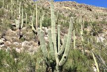 Arizona / From cactus to pine trees, so much to see and do!