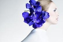 Blue Velvet / by Melissa Duke