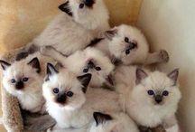 Love Cats ❤