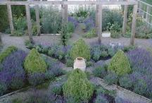 Jardin Potager  / by Annelle Barnett