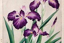 Lignes florales