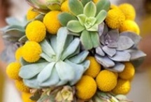 Succulents and Yellow
