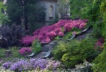 Lovely English Gardens / by Karen Lewis