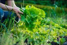 Garten - Grün - Pflanzen / Alles rund ums Thema Garten, Pflanzen und Gartengestaltung.