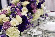 Wedding Stuff! / I'm getting married!!   / by Lisa Hamilton