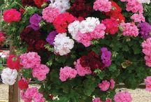 flowers / by Linda Deeb Kemp