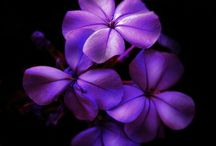 Purple Passion / My favorite color