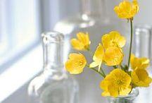 Yellow - Gul / The beautiful colour Yellow <3
