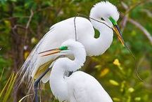 Animals - Birds of a Feather / Not only are the color combinations beautiful, but the photography as well. / by Susan