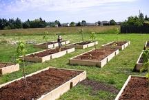 Vegetable gardening  / by That Bloomin Garden