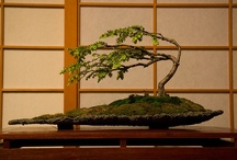 Bonsai and Ikebana / by Janet Williams