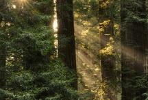 Woodland Serenity / by David Storey